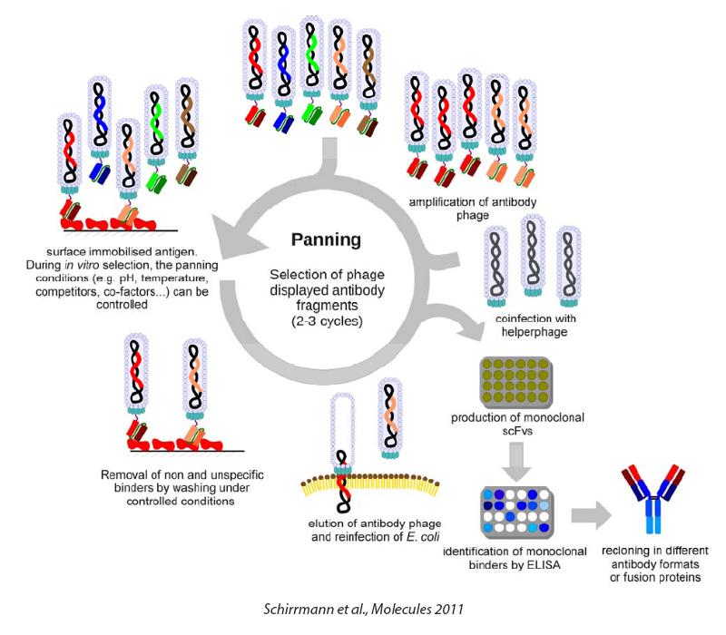 antibody_technologies